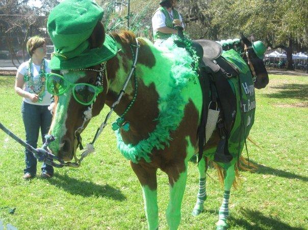 Horse @ St. Patrick'S Day in Savannah, Georgia